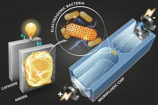 فراوری برق از باکتری ها