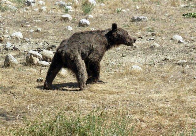 مصاحبه با شبنم فتاحی ، زنی که مدافع توله خرس سوادکوه بود