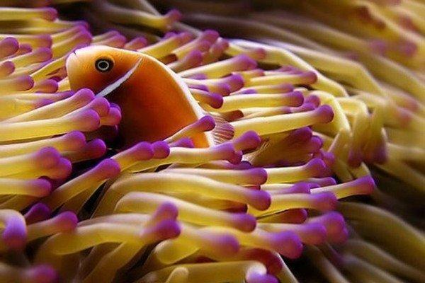 فهرست گونه های ماهیان خلیج فارس و تنگه هرمز ثبت شد