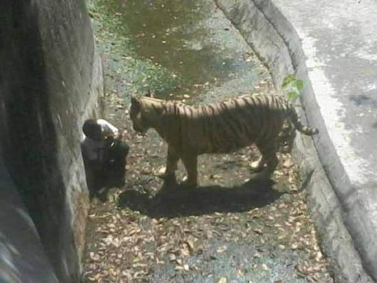 حوادث وحشتناک و غم انگیز در باغ وحش ها