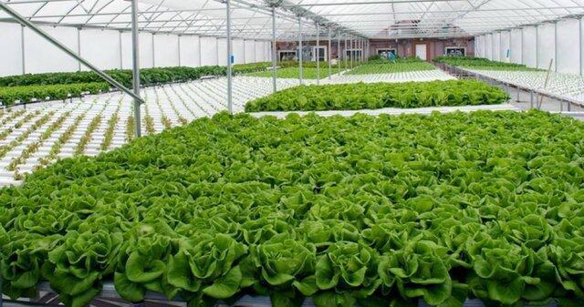 خراسان رضوی، دومین استان کشور از لحاظ توسعه محصولات گلخانه ای است