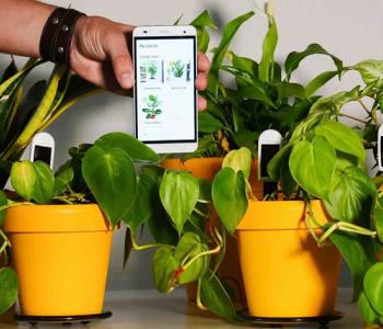 سنسوری که سلامت گیاهان را ردیابی می کند