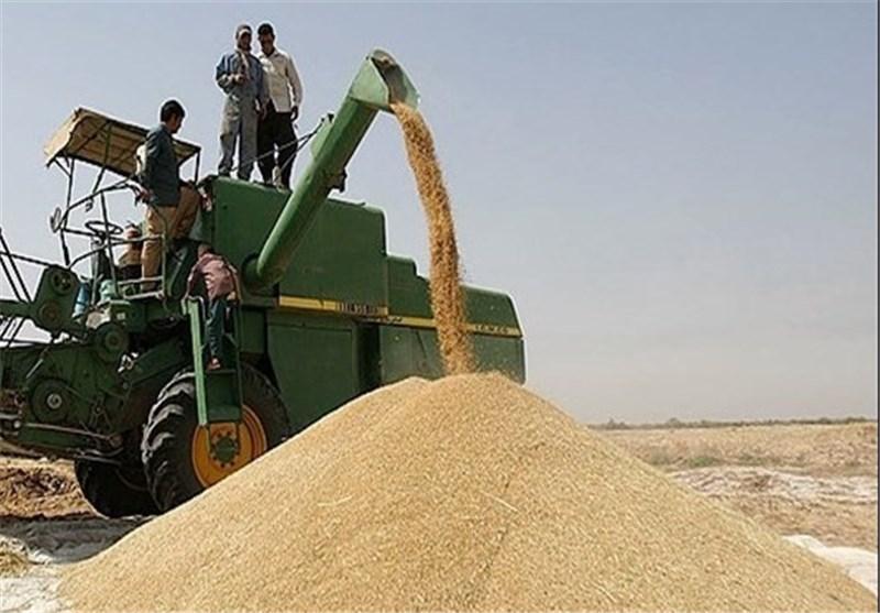 خرید گندم از 7.1 میلیون تن گذشت