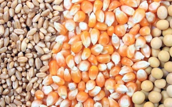 1200 تن بذر ذرت در گمرک باقی مانده است